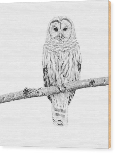 Barred Owl Sentry Black And White Wood Print