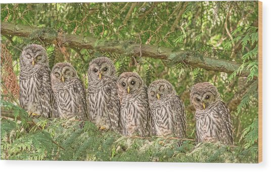 Barred Owlets Nursery Wood Print