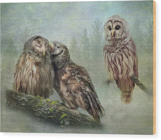 Barred Owls - Steal A Kiss Wood Print