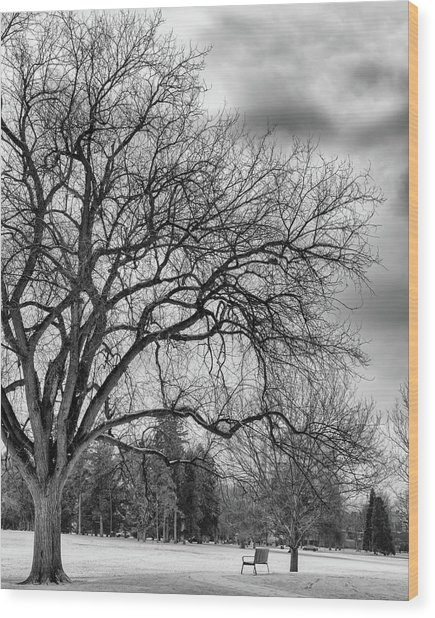 Winter In Cheesman Park, Denver, Co Empty Trees And Empty Benches Wood Print