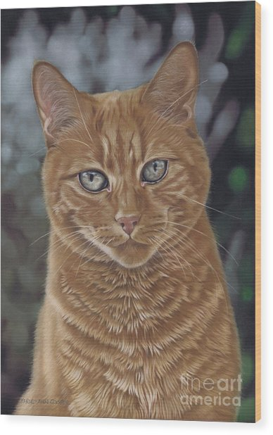 Barry The Cat Wood Print