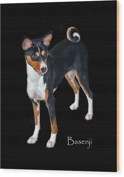 Basenji Wood Print