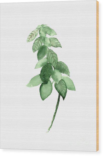 Basil Watercolor Art Print Painting Wood Print