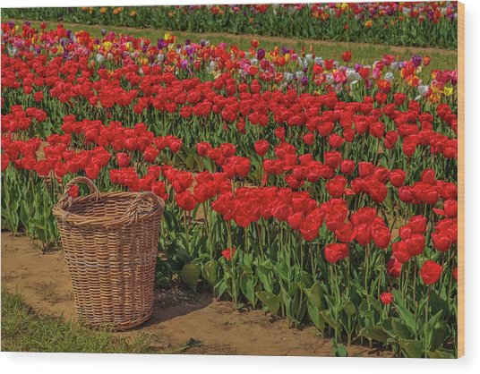 Wood Print featuring the photograph Basket For Tulips by Susan Candelario
