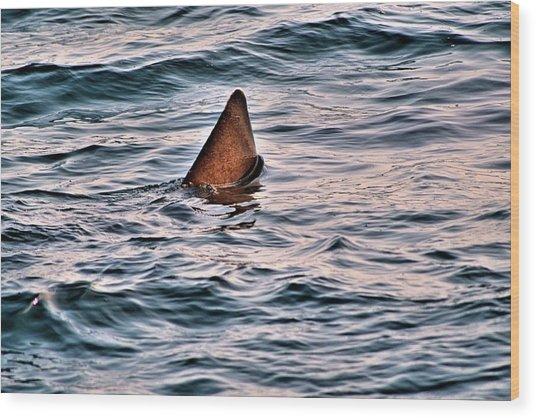 Basking Shark In July Wood Print