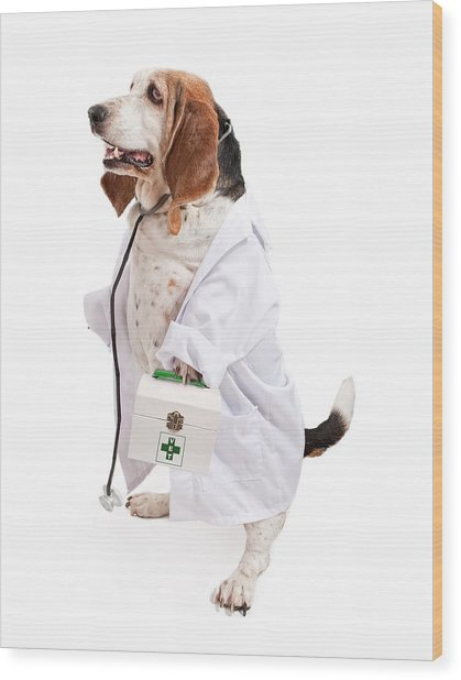 Basset Hound Dog Dressed As A Veterinarian Wood Print