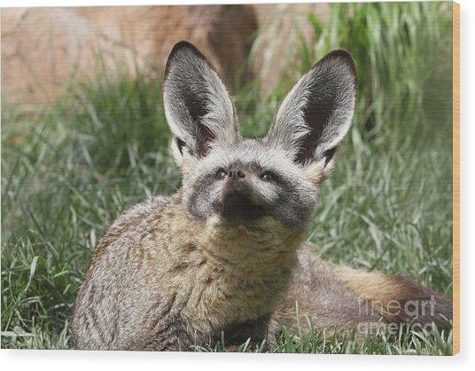 Bat-eared Fox Wood Print