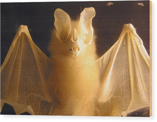 Bat Out Of Gel Wood Print by Jez C Self