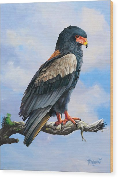 Bateleur Eagle Wood Print
