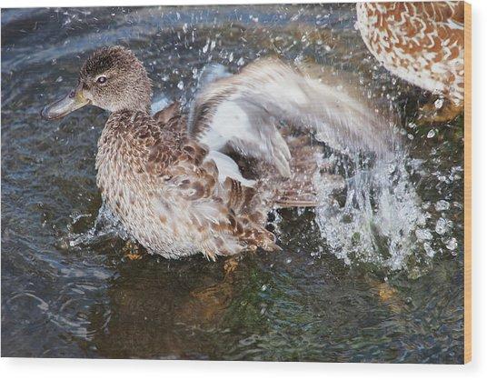 Bathing Duck Wood Print