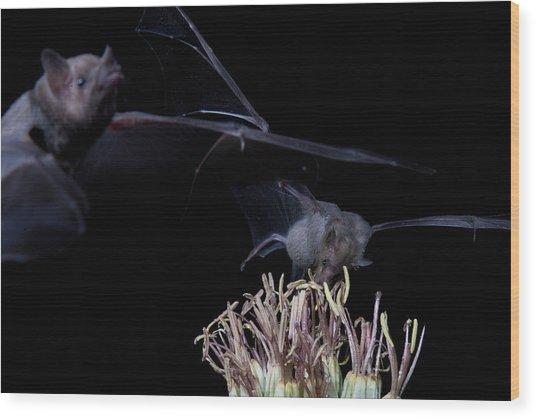 Bats At Work Wood Print by E Mac MacKay
