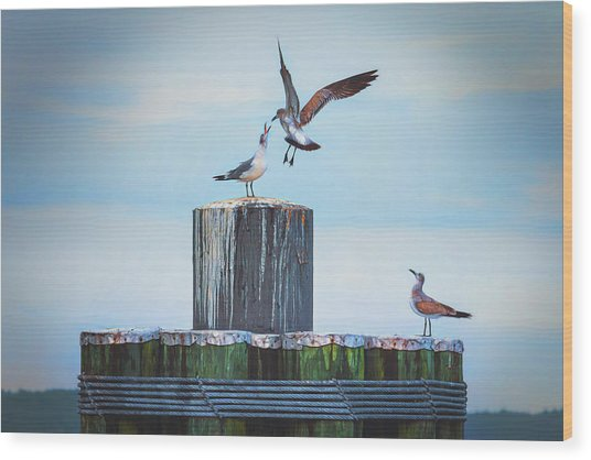 Wood Print featuring the photograph Battle Of The Gulls by Cindy Lark Hartman