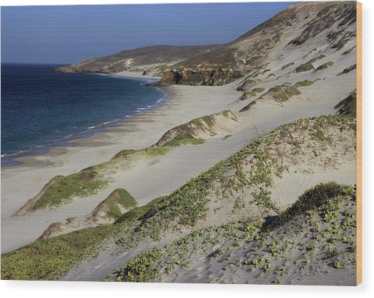 Bay Beach And Sand Dunes Wood Print