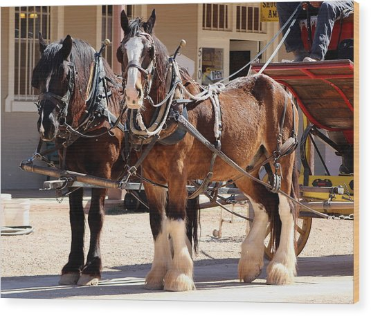 Bay Colored Clydesdale Horses Wood Print