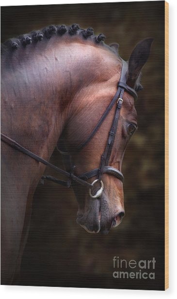 Bay Horse Head Wood Print