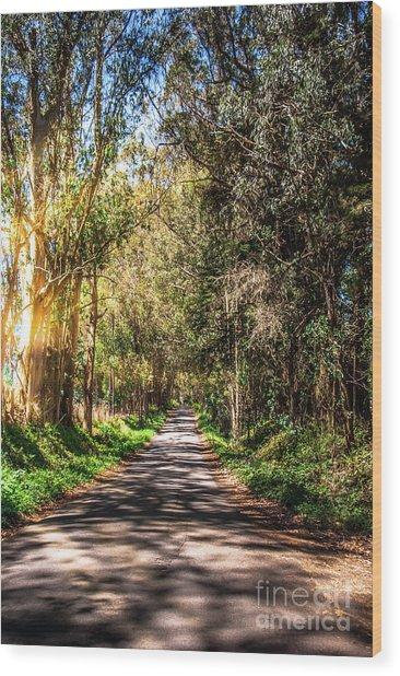 Bayhill Road Bodega Bay Sonoma County Wood Print by Blake Webster