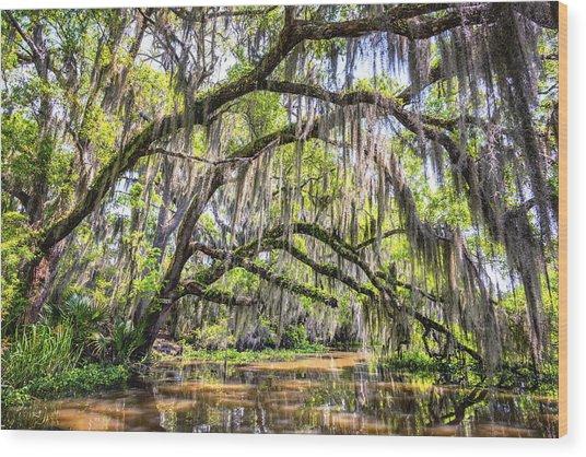 Bayou Cathedral Wood Print