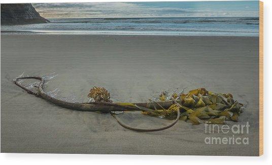 Beach Bull Kelp Laying Solo Wood Print