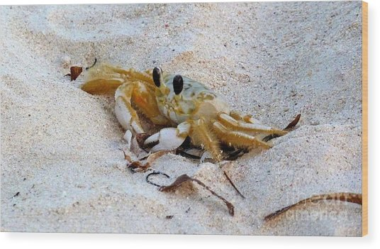 Beach Crab Wood Print