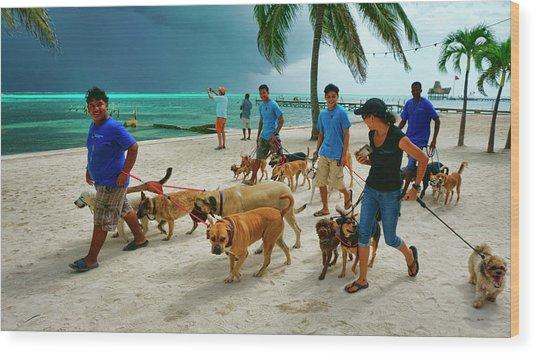 Beach Dog Walkers On Ambergris Caye, Belize Wood Print