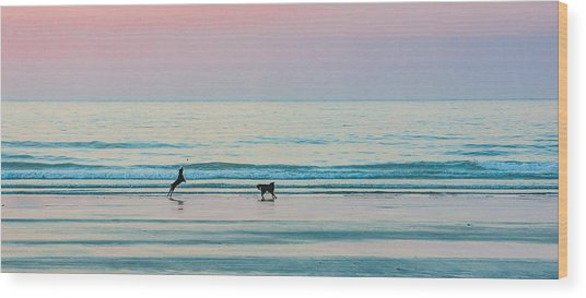 Beach Dogs Playing At Dawn Wood Print
