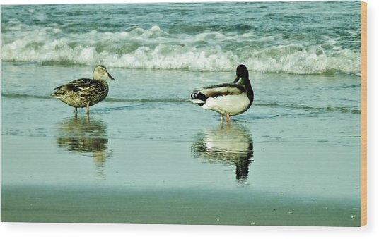 Beach Ducks Wood Print