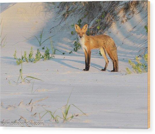 Beach Fox #3 Wood Print