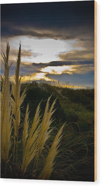 Beach Grass Wood Print by Patrick  Flynn
