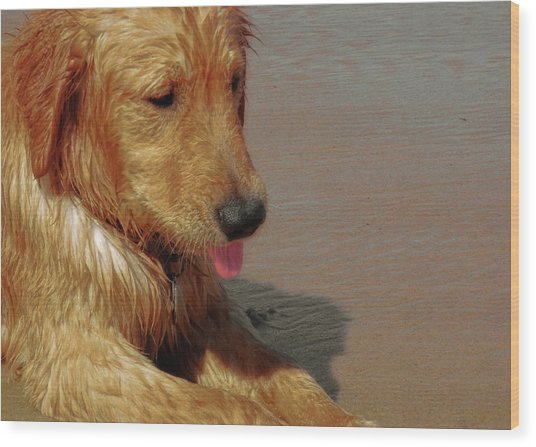 Beach Pup Wood Print by JAMART Photography