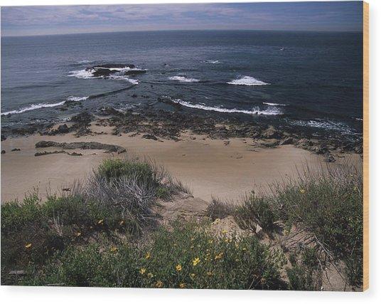 Beach Reef Point Wildflowers Wood Print
