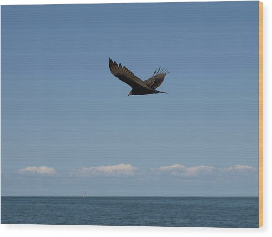 Beach Vulture Wood Print