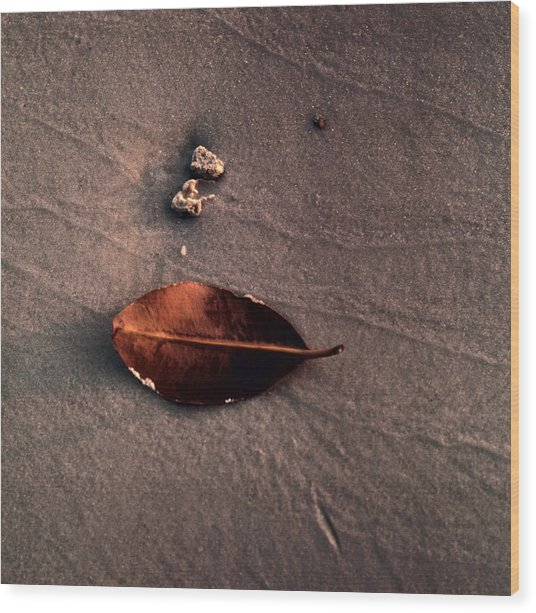 Beached Leaf Wood Print