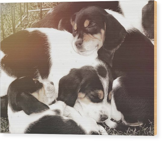 Beagle Pile Wood Print by JAMART Photography