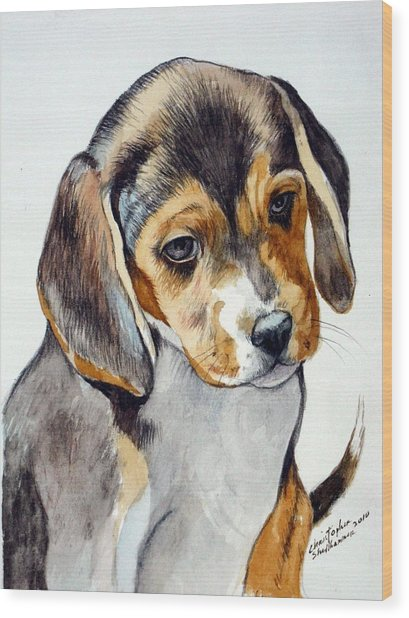 Beagle Puppy Wood Print