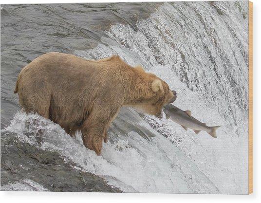 Bear Fishing At Brooks Falls Wood Print
