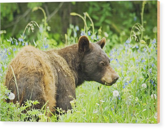Bear In Flowers Wood Print