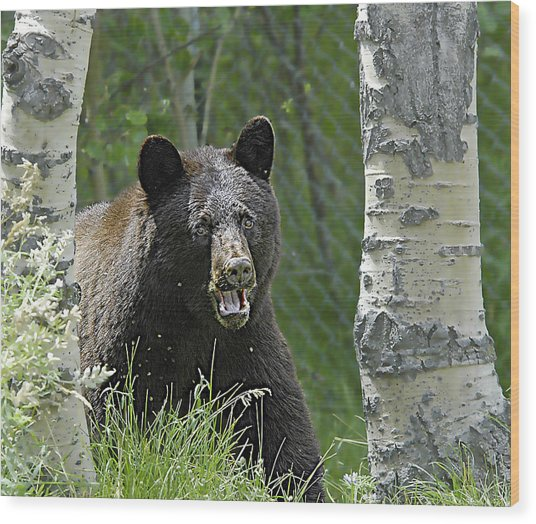 Bear In Yard Wood Print