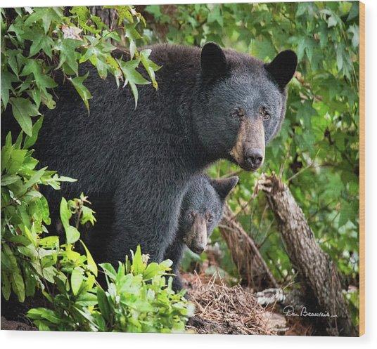 Bear Mom And Cub 9539 Wood Print by Dan Beauvais