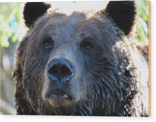 Bear On Grouse Wood Print