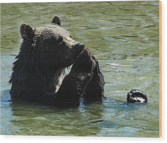 Bear Prayer Wood Print