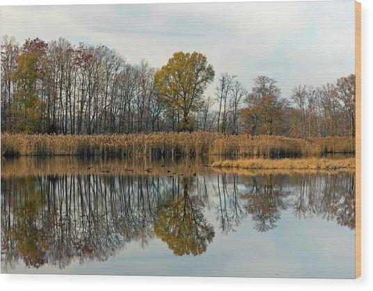 Bear Swamp Mirror Wood Print