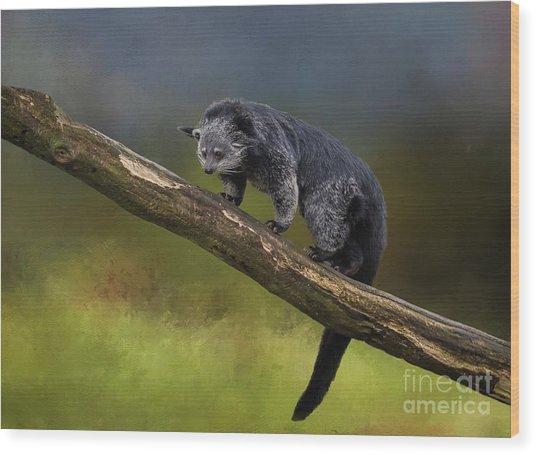 Bearcat Wood Print