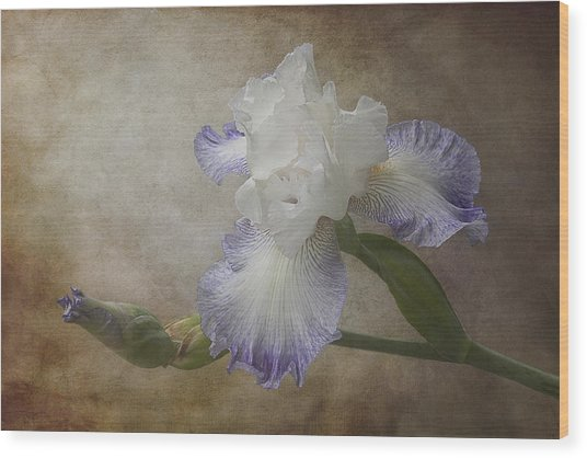 Bearded Iris 'gnuz Spread' Wood Print