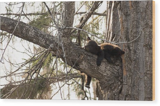 Bearly Hanging In There Wood Print