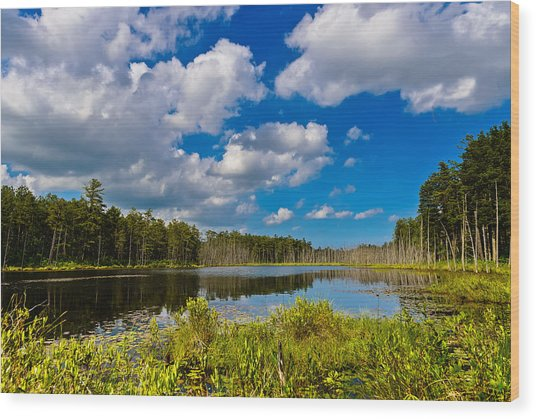 Beautiful Afternoon In The Pine Lands Wood Print