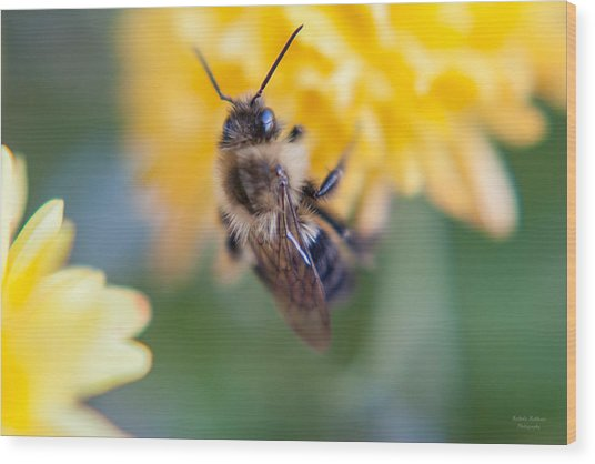 Beautiful Bee Wood Print