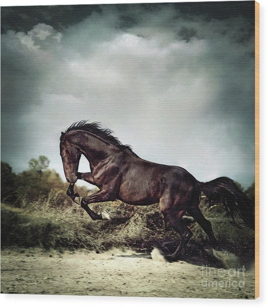 Beautiful Black Stallion Horse Running On The Stormy Sky Wood Print