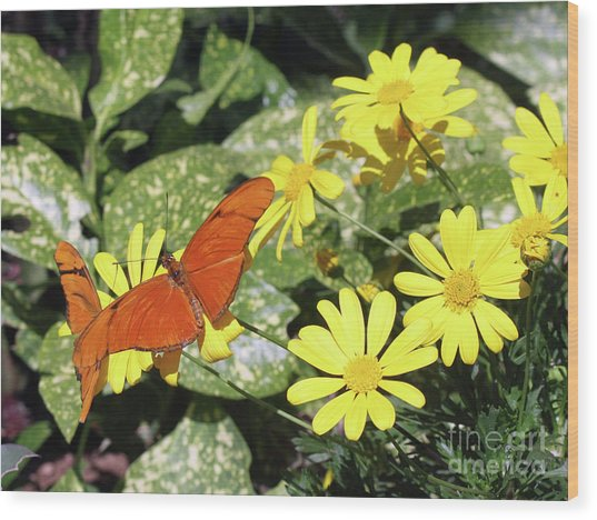 Beautiful Butterflies Wood Print