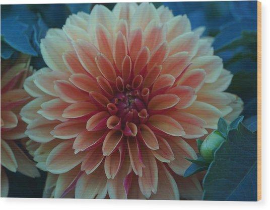 Beautiful Dahlia 3 Wood Print