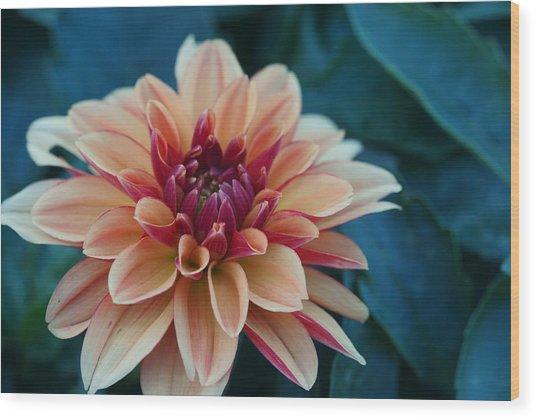 Beautiful Dahlia 4 Wood Print